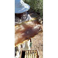 Vendo miel de Alcarria y polen fresco en Madrid y alrededores