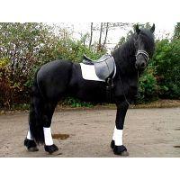 Young Energetic Fresian Gelding Horse en venta