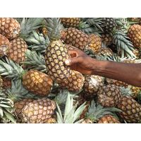 Venta y exportación de piña: Cayena suave/ Pan de azúcar
