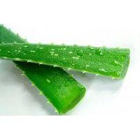 Negocio de productos naturales de aloe y plantas